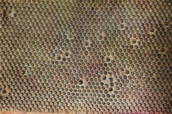 """""""Натянутые"""" мисочки на полуотстроенном соте в безматочной семье (фото Гонтарского)."""